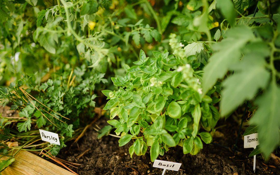 Why we started a veggie garden